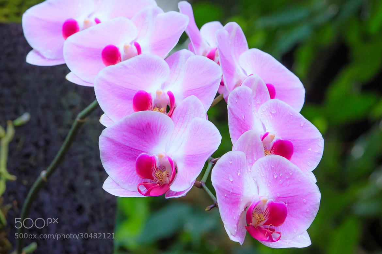Photograph Purple by Ryusuke Komori on 500px