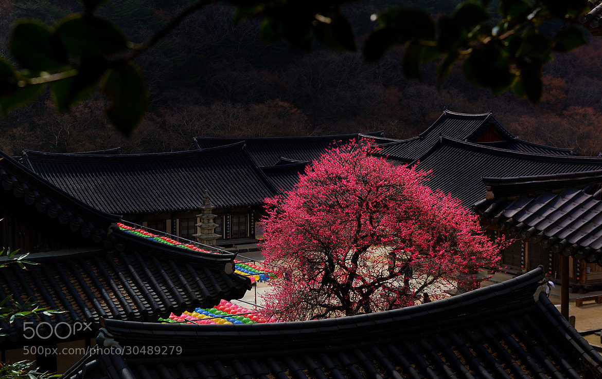 Photograph Red fragrance of temple by KIM EZRA on 500px