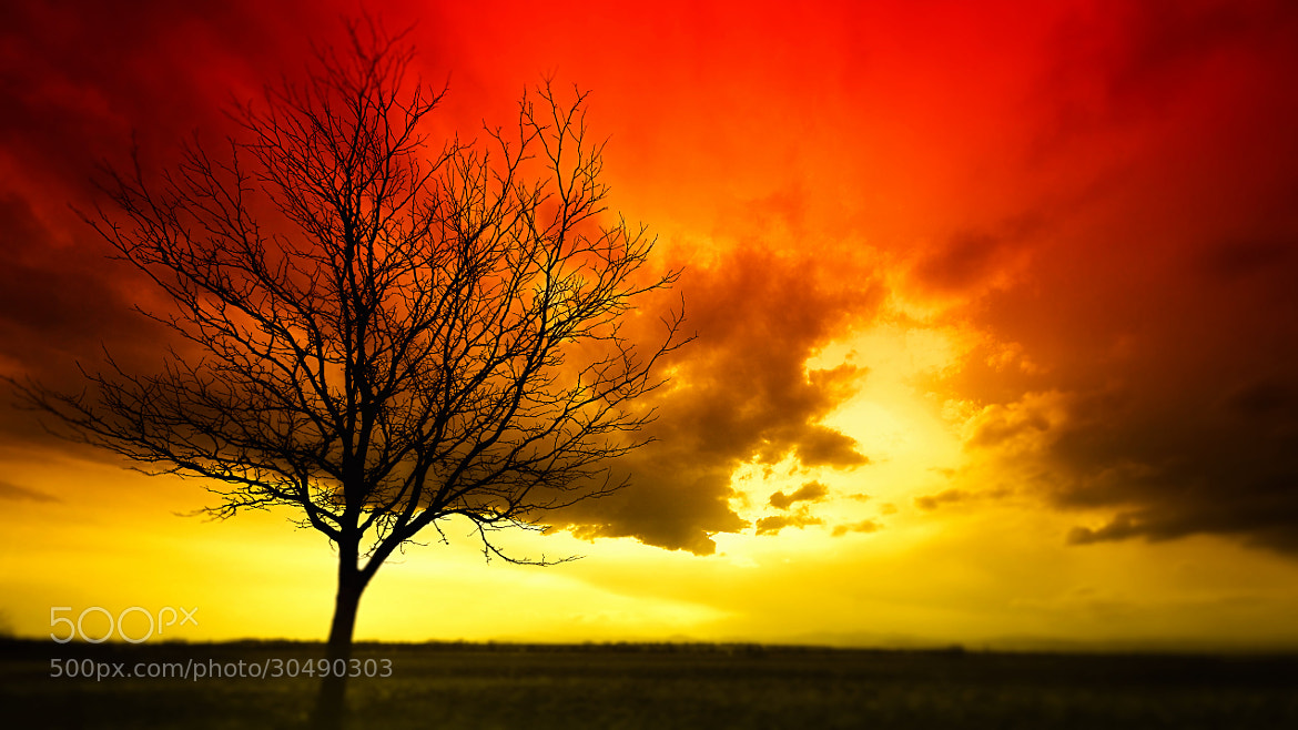 Photograph Burning Tree by Johnny Gomez on 500px