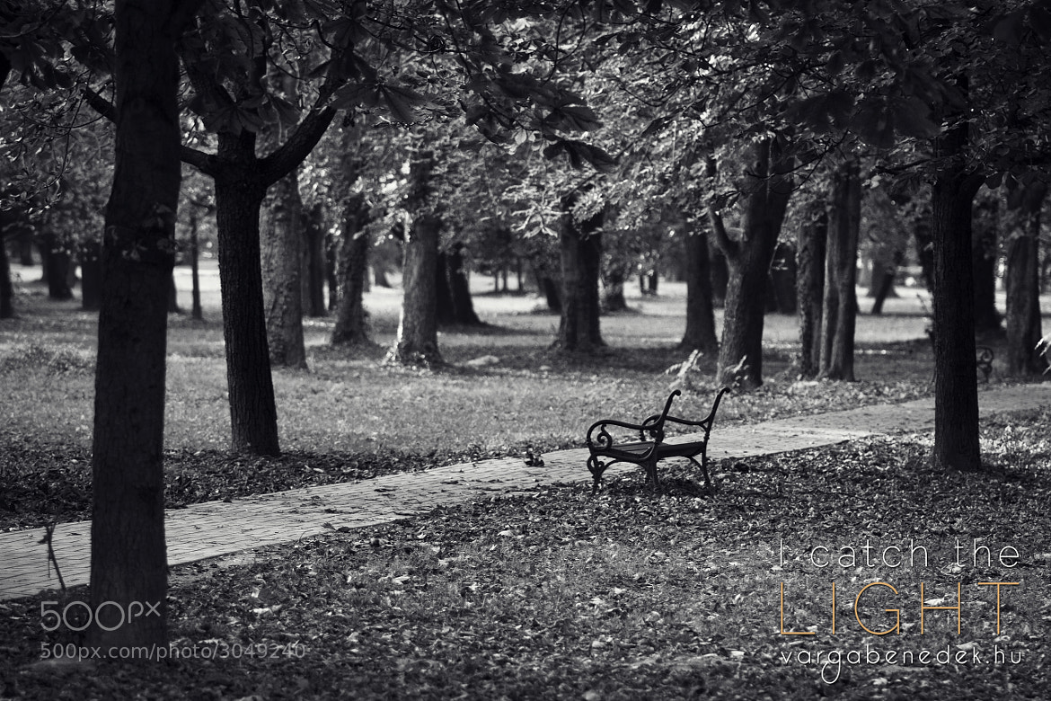 Photograph Bench and Trees and Autumn by Benedek Varga on 500px
