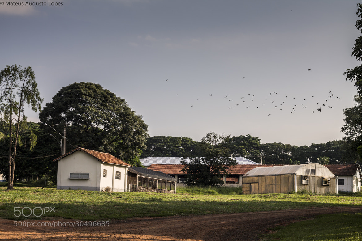 Photograph Flock of Birds  by Mateus Lopes on 500px