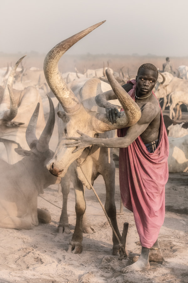 Mundari and their beasts by Trevor Cole on 500px.com