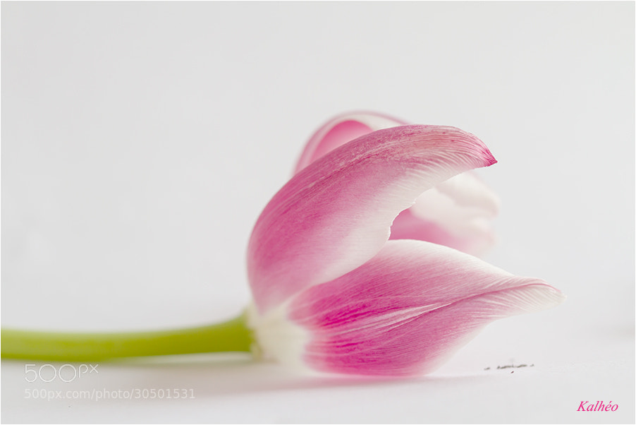 Photograph La vie en rose by florence Kalheo on 500px
