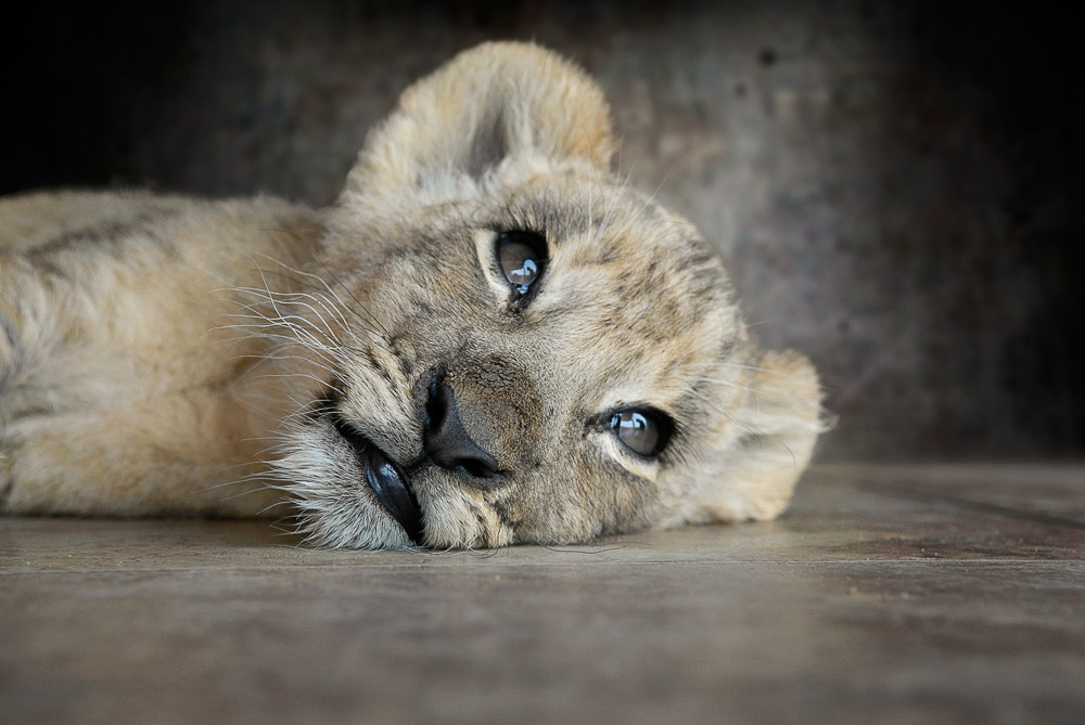 Photograph I'm Awake!! by Cathy Taylor on 500px