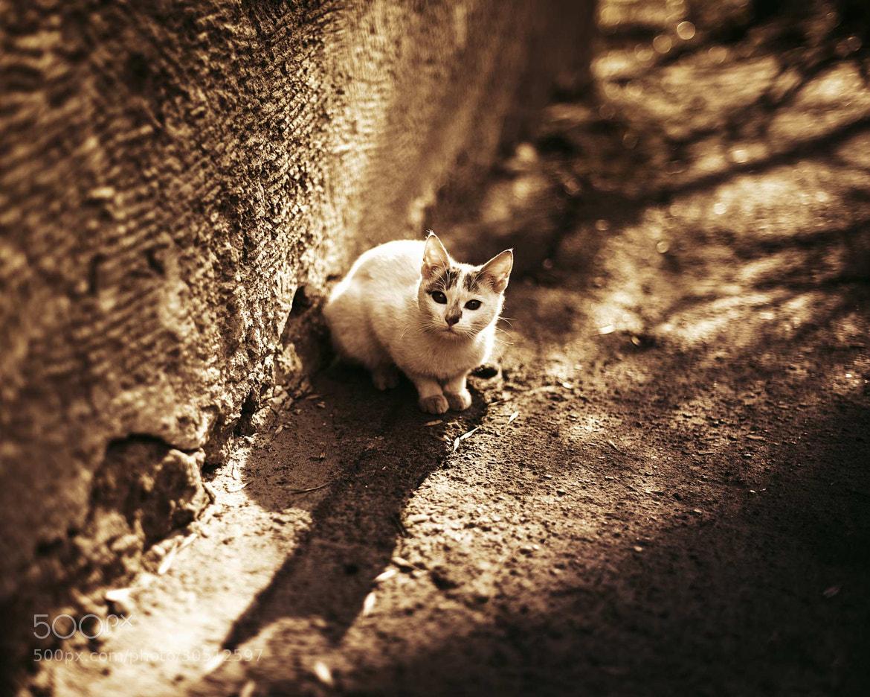 Photograph looking cat by Alina Bronnikova on 500px