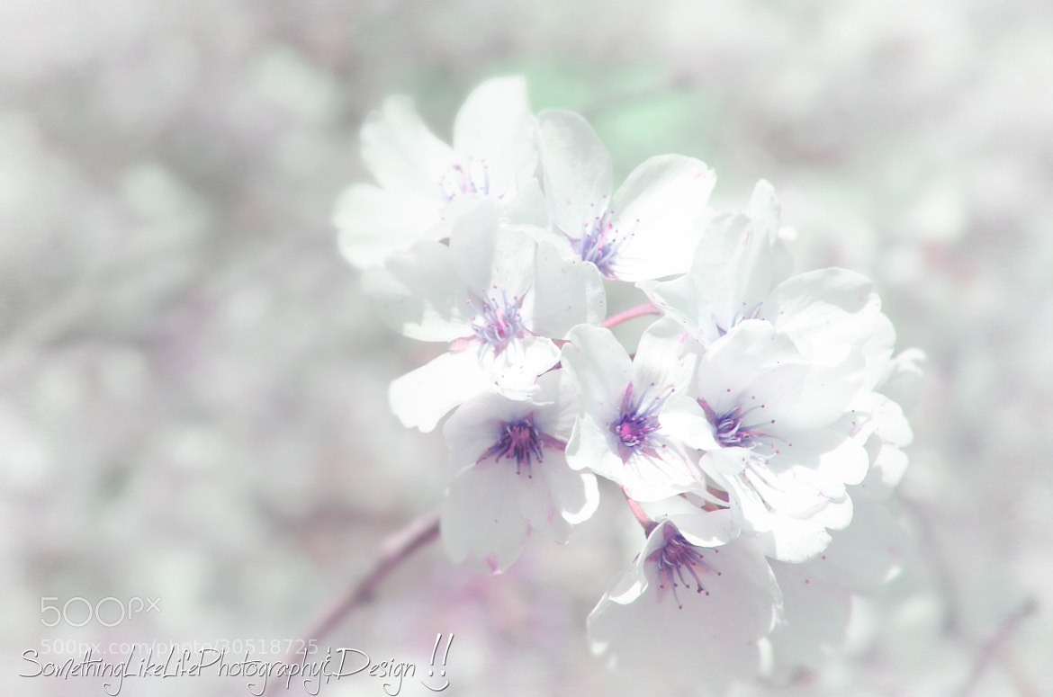 Photograph Blossoms. by Nicole Roloff on 500px