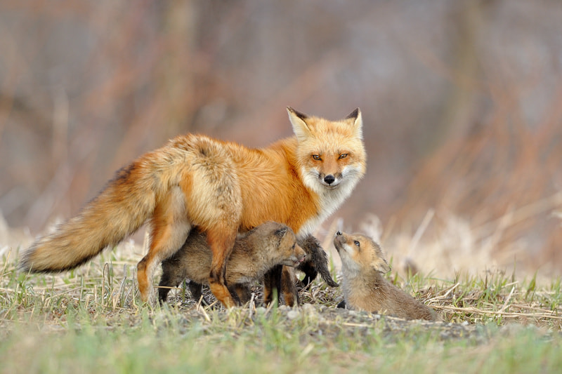Photograph Family reunion! by Lise De Serres on 500px