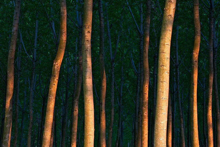 Photograph Woods by Marco Dian on 500px