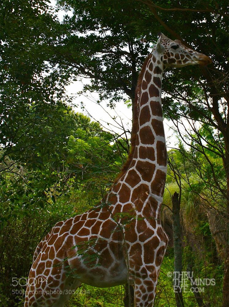 Photograph Standing Tall by Dina Eiken on 500px