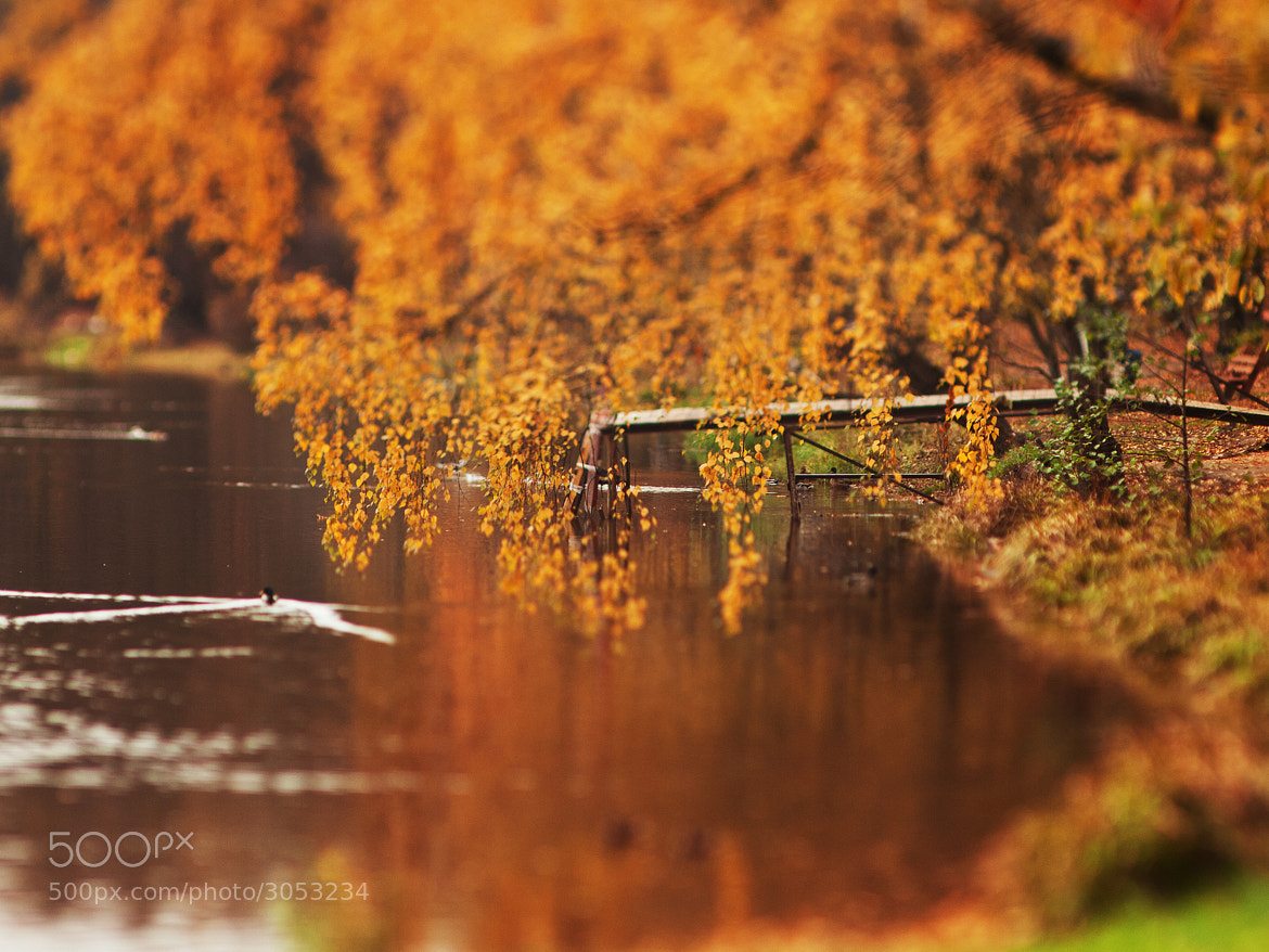 Photograph Tilted autumn #9. by Sergey Kuznetsov on 500px