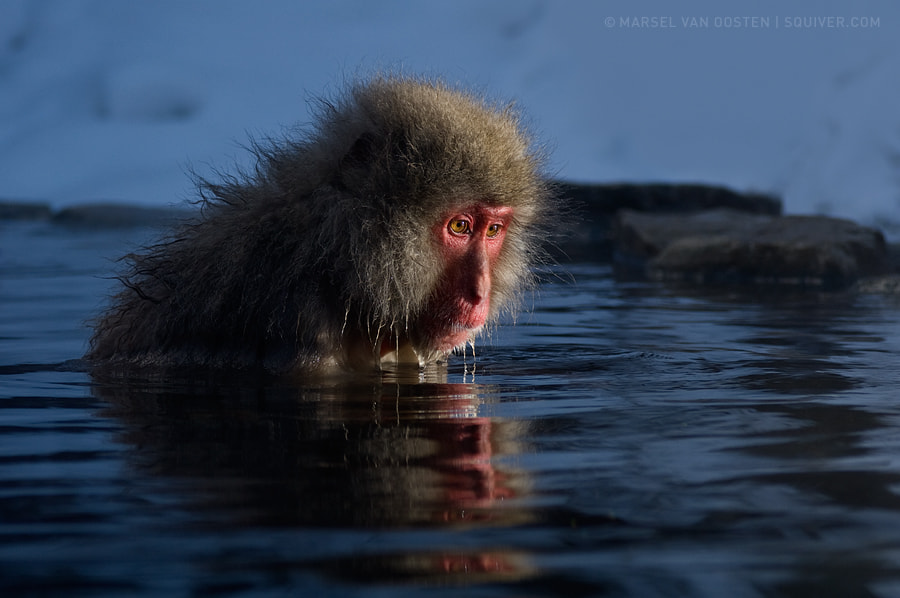 Photograph Introspection by Marsel van Oosten on 500px