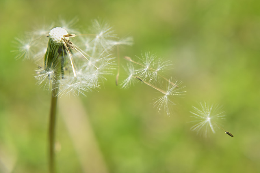 Wishes into the wind by Ana V. on 500px.com