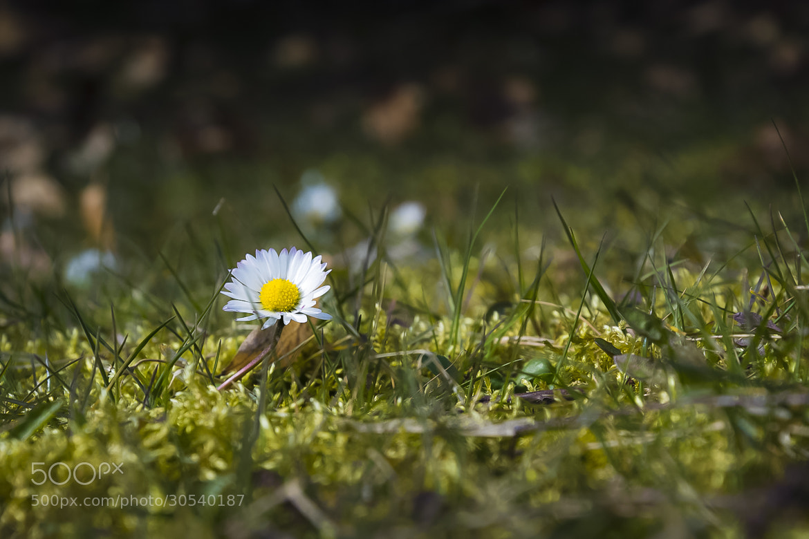 Photograph Spring is coming...? by Tom Maxim on 500px