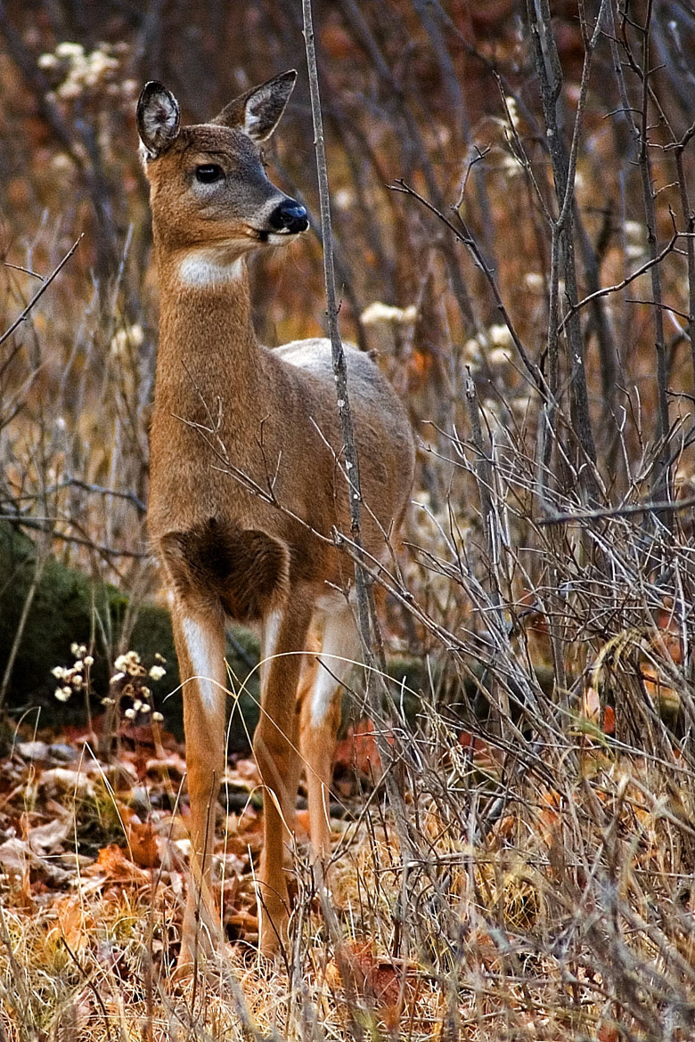 Photograph Doe by Mark Mathison on 500px