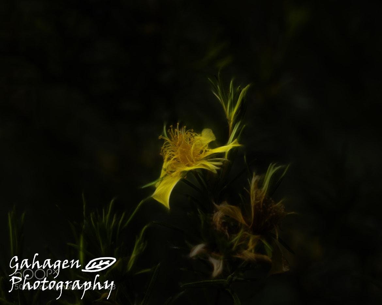 Photograph A Light in the Dark fract by Ben Gahagen on 500px
