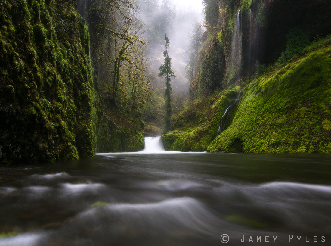 Photograph Hidden Tears of Spring by Jamey Pyles on 500px