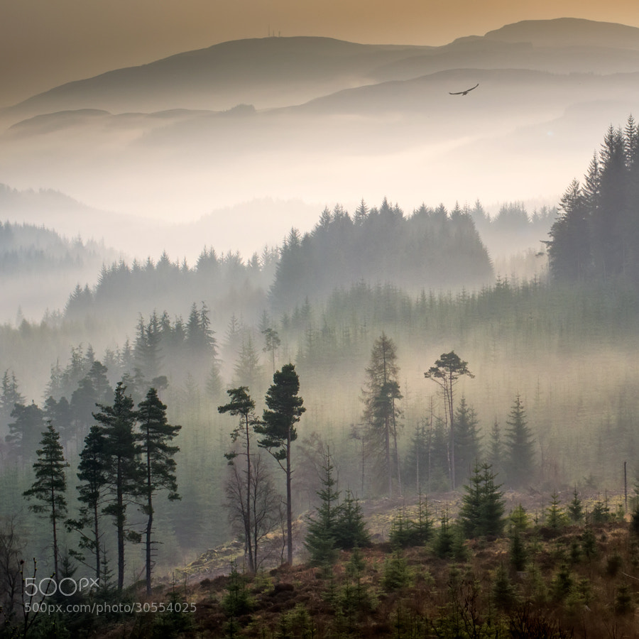 Photograph Land of the Raptor... by David Mould on 500px
