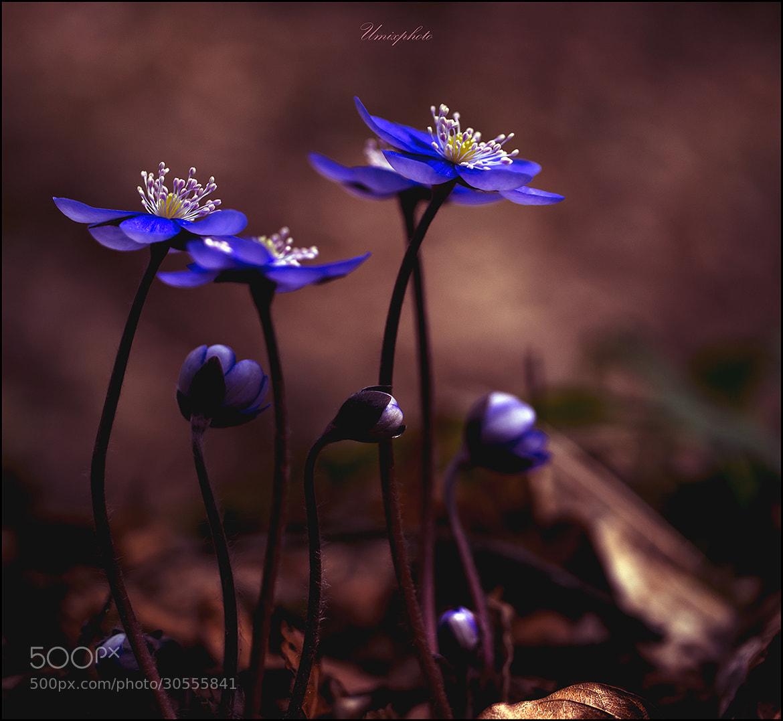 Photograph Spring Time by Jaro Miščevič on 500px