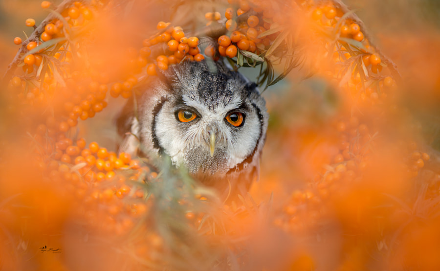 Orange by Tanja Brandt on 500px.com