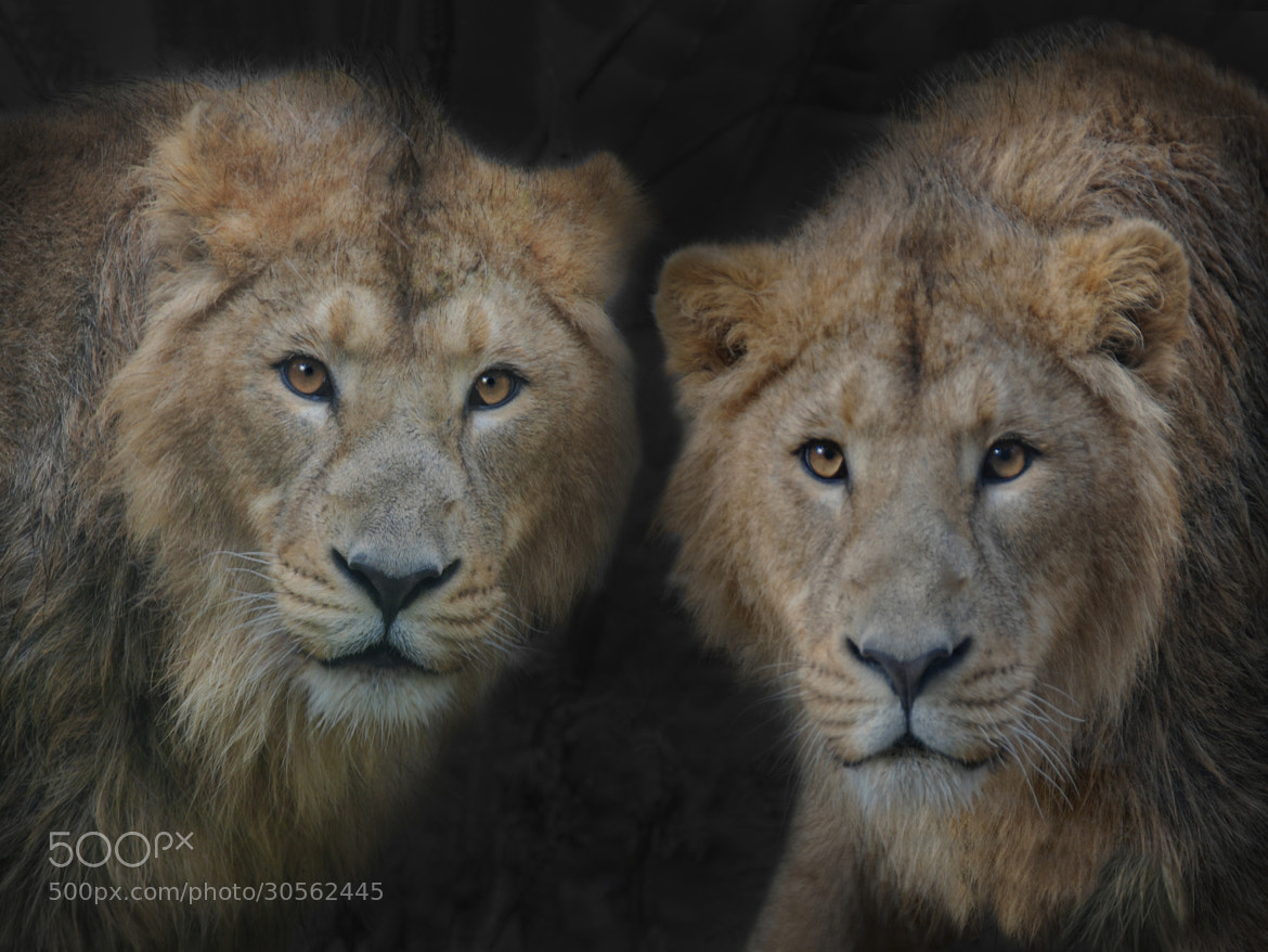 Photograph big brothers by Joachim G.  Pinkawa on 500px