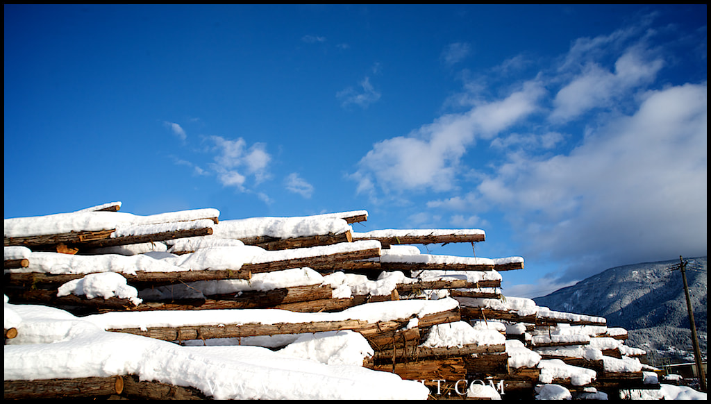 Photograph Pile of logs by Emanuel Hult on 500px