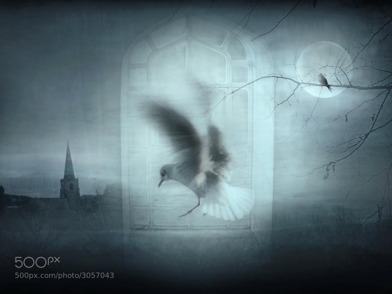 Photograph Fantasy Window by Jenny Woodward on 500px