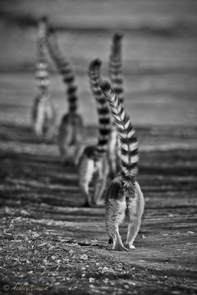 Photograph Troop Movement by Ashley Vincent on 500px