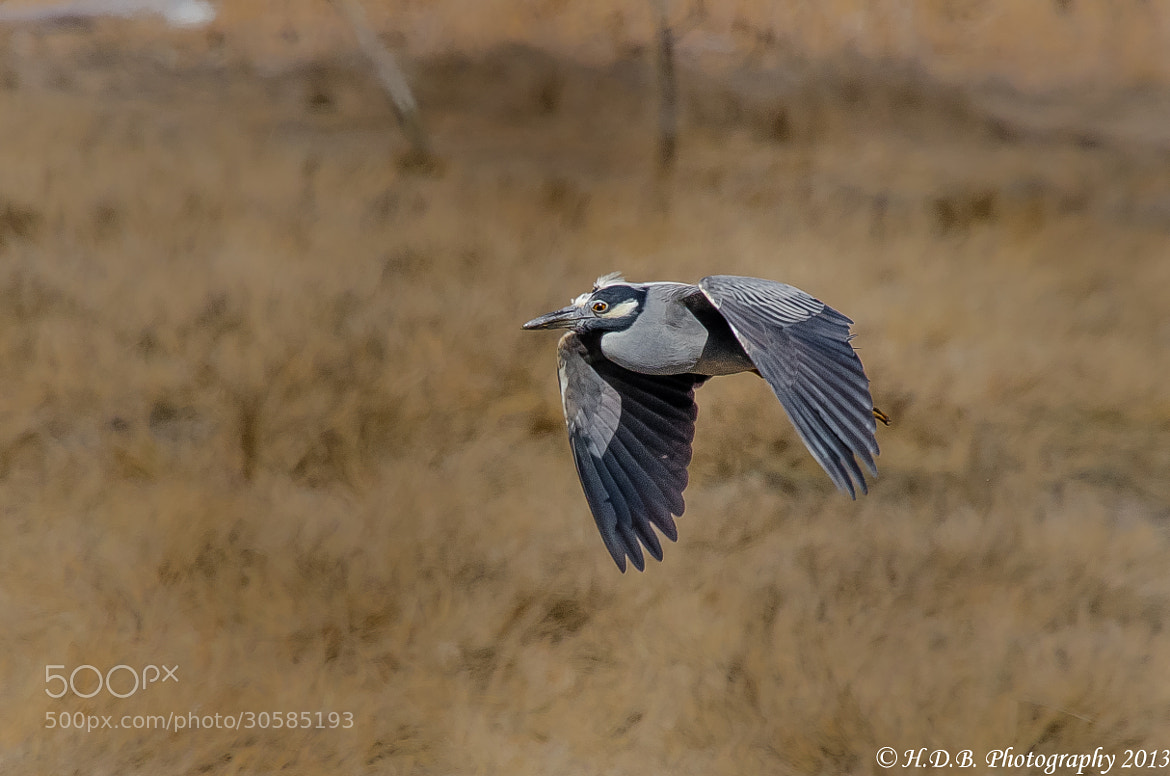 Photograph YCNH In Flight by Harold Begun on 500px