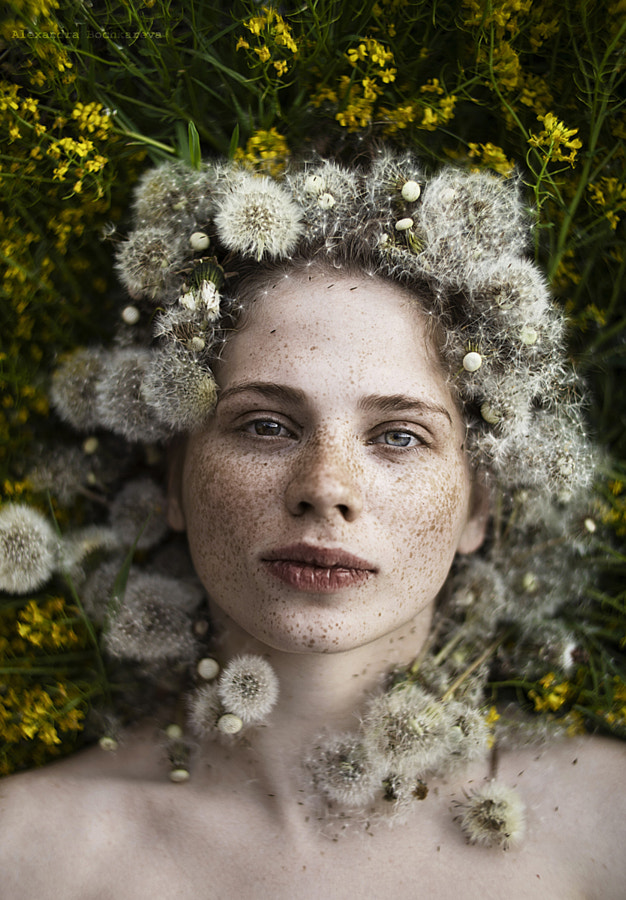 Dandelion || by Alexandra Bochkareva on 500px.com