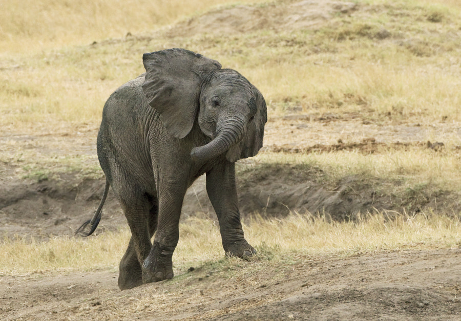 This youngster enjoys himself in where else but Hwange National Park, Zimbabwe