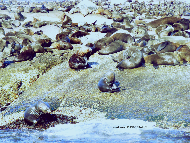 Photograph Sea Bath by Raja Asad on 500px