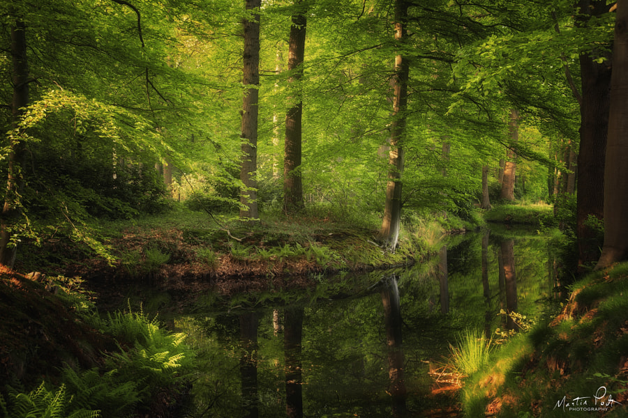 Spring reflections by Martin Podt on 500px.com
