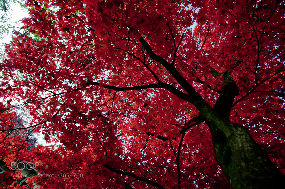 Photograph Fall into red by Tobias Gass on 500px