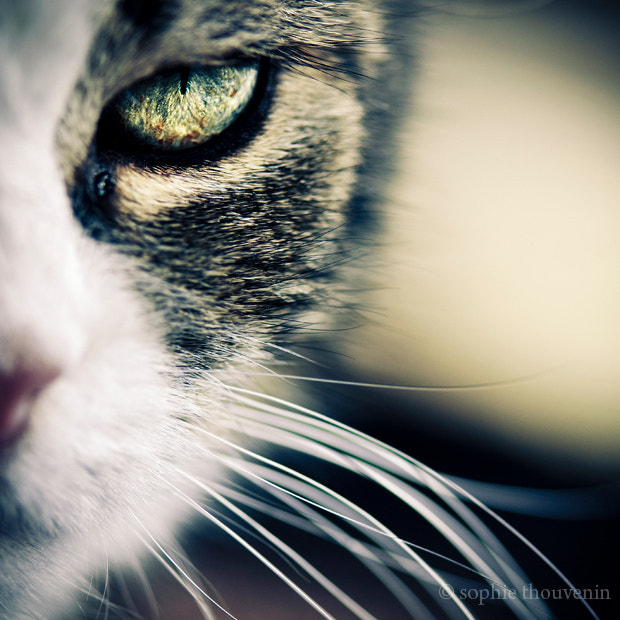 Photograph fauvisme by sophie thouvenin on 500px