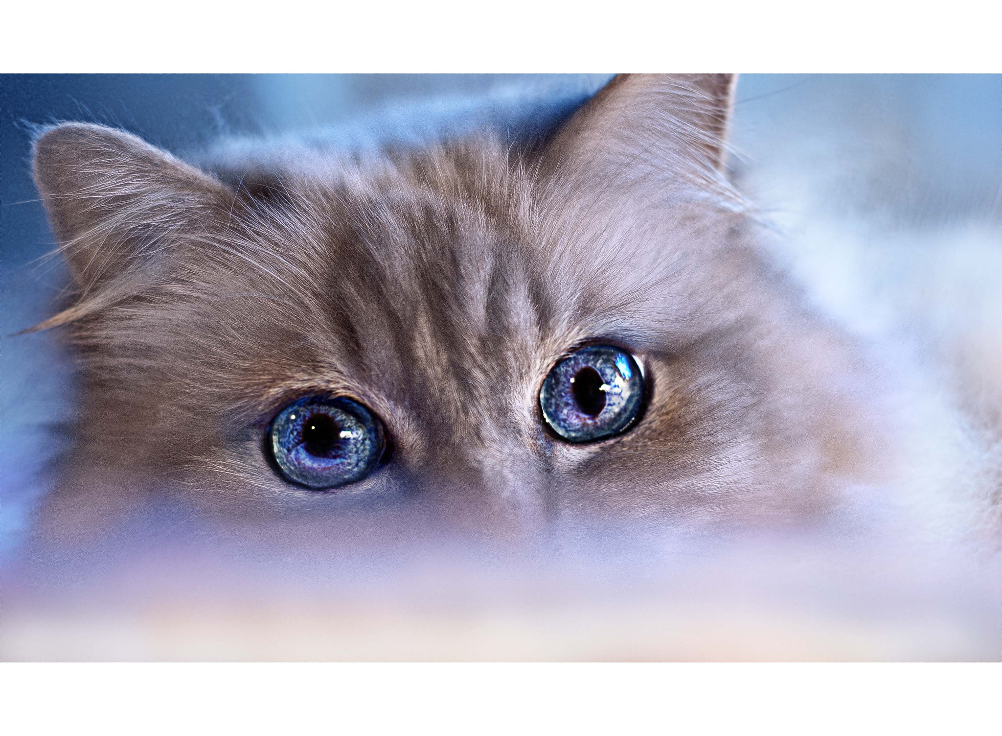 Photograph blue by White Cat on 500px