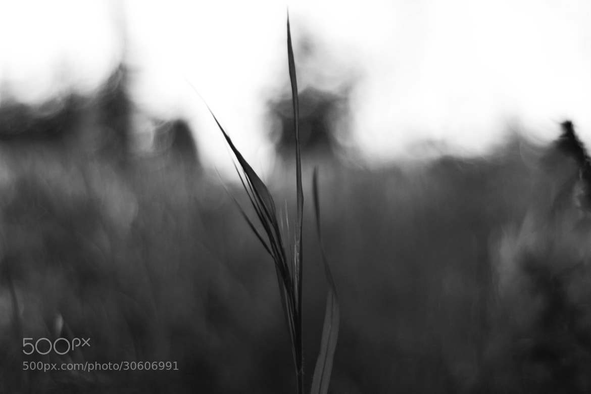 Photograph Black and 'Wheat' by Federico Rinaldi on 500px