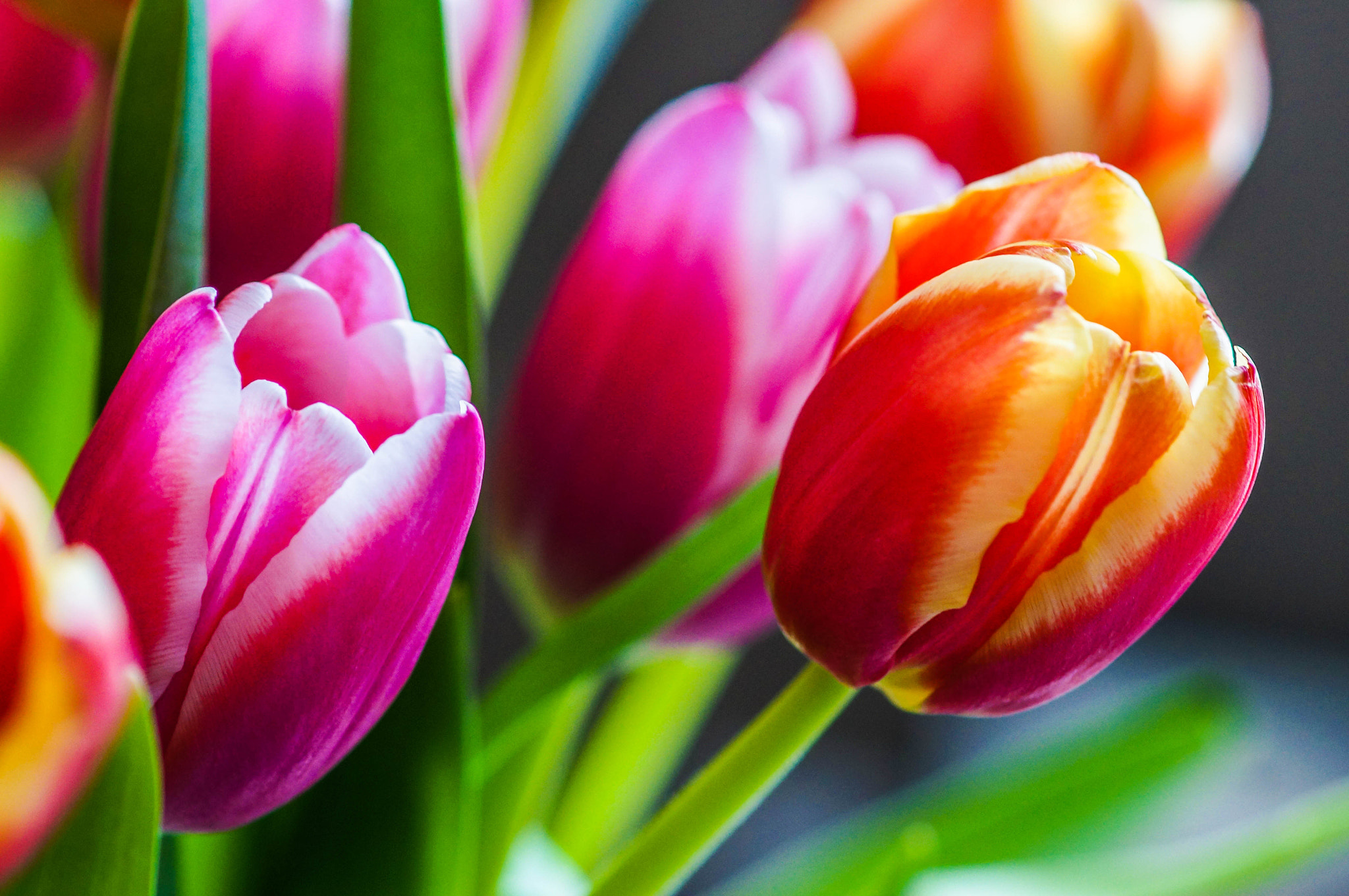 Photograph Spring is Here by Alyssa Paraggio on 500px