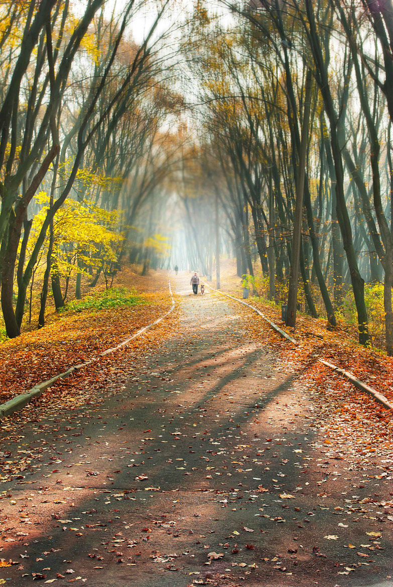 Photograph Autumn walk III by Inna Petrova on 500px