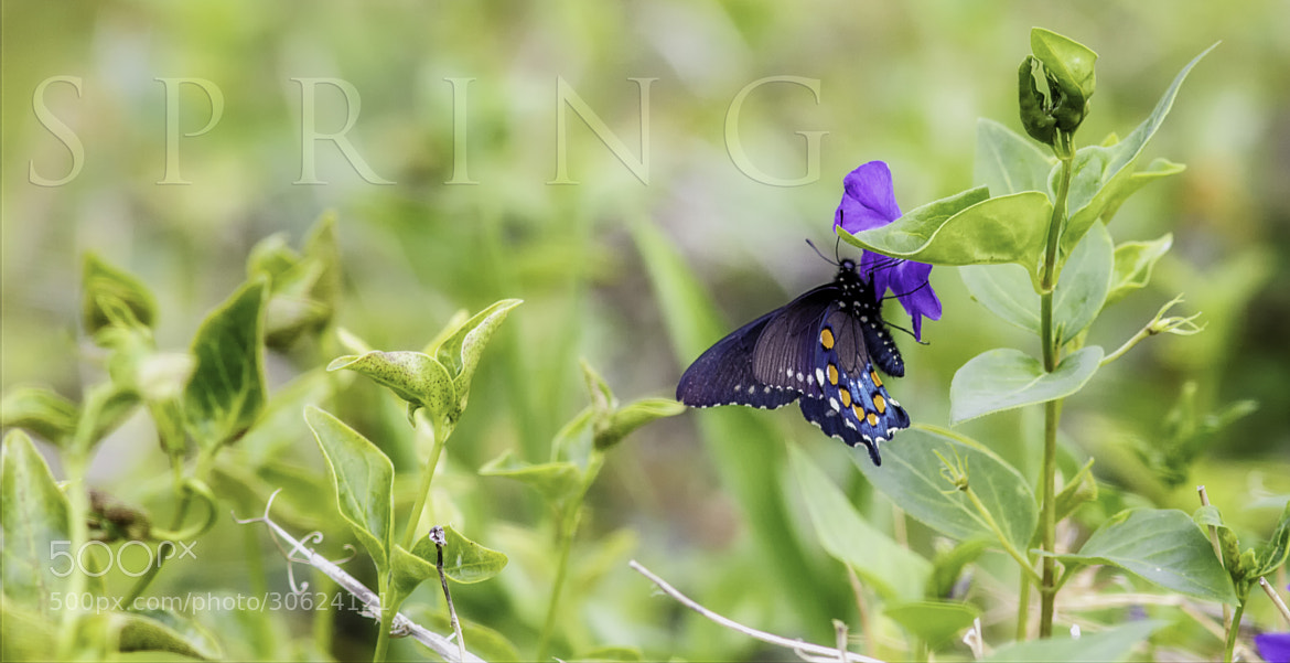 Photograph Spring! by Marianne Bush on 500px