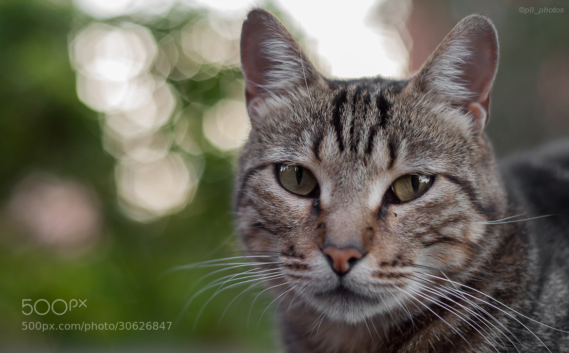 Photograph Bokeh by Paulo Luft on 500px