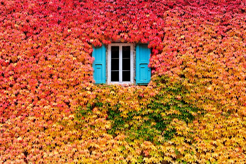 "Photograph A wall of fall by Eric  ""Kala"" Forey on 500px"