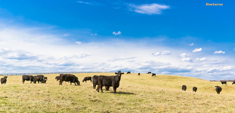 Photograph Countryside Farm by Cuong Van on 500px