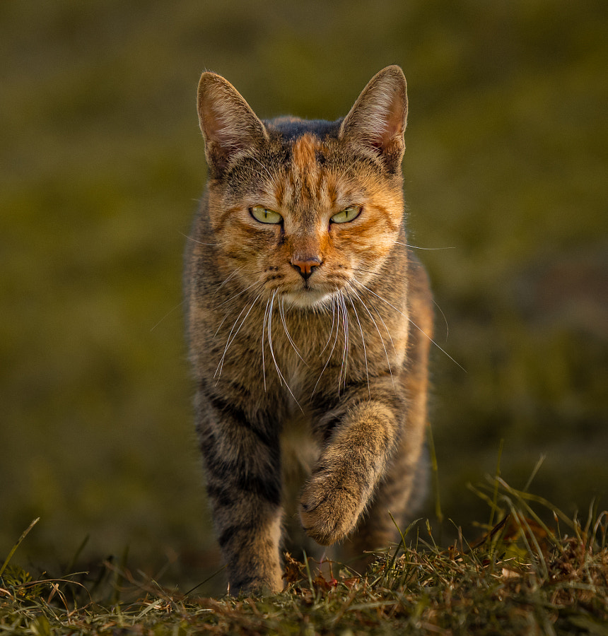 so serious by Bogdan Z. on 500px.com