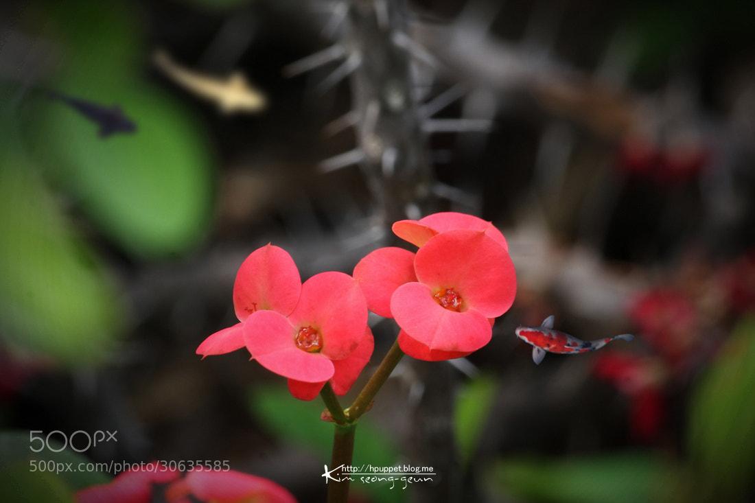 Photograph Giraffe flowers  by kim seong-geun on 500px