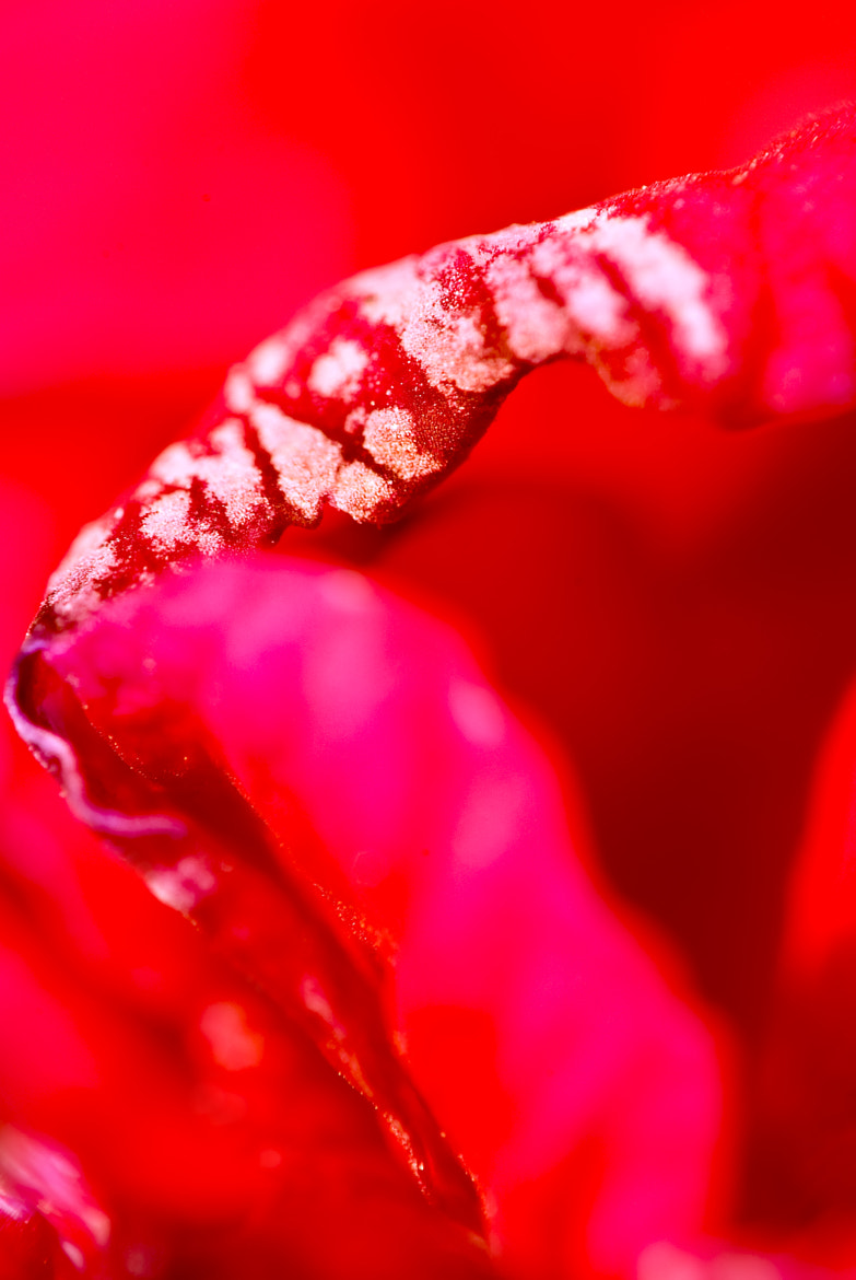 Photograph Red macro by Lubomir Marcak on 500px