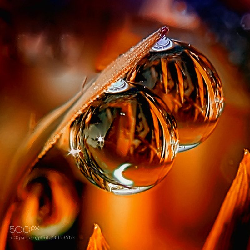 Photograph dews in flame by teguh santosa on 500px