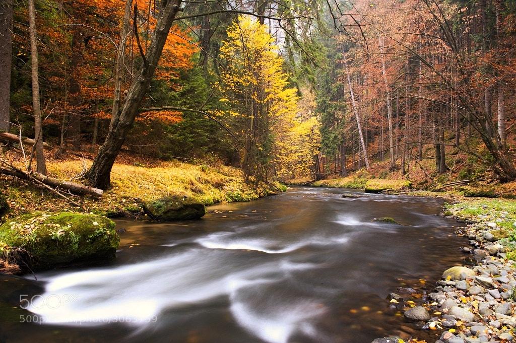 Photograph Autumn by Karel Hajek on 500px