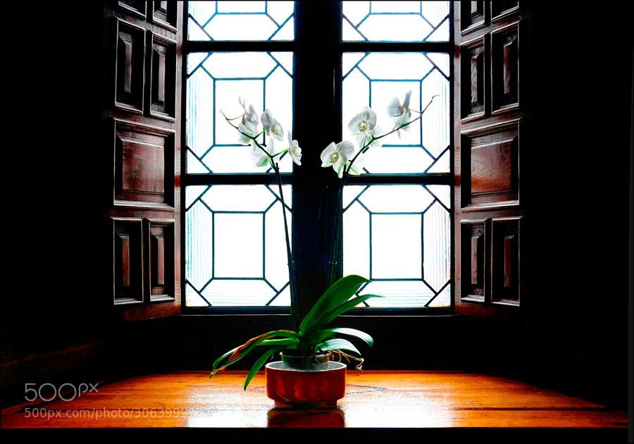 Samos  ORQUIDEAS EN LA VENTANA  En el interior del Monasterio  _______________________  Samos  ORCHIDS IN THE WINDOW  inside the Monastery