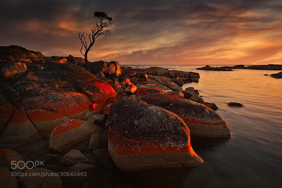 Photograph Bay of fires by Oxy Z on 500px