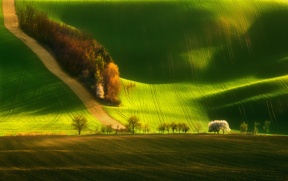 Photograph Spring on fields.... by Krzysztof Browko on 500px